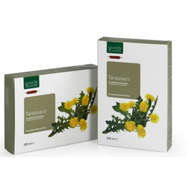 tarassaco ampolle ligne de plantes natura service